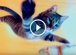 Прыгучий кот
