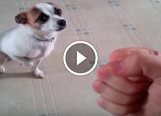 Собака актер