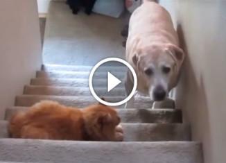 Собаки боятся котов