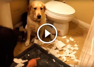 Виноватые собаки