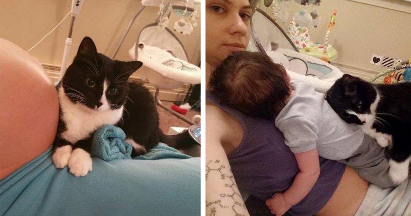 Кошка полюбила малыша