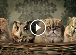 20 фактов о котах