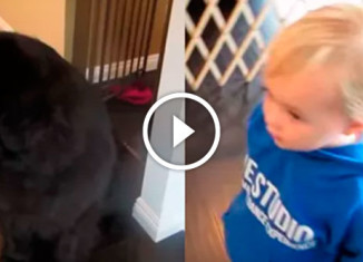 Девочка играет в прятки с собакой
