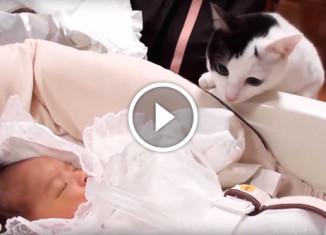Реакция кошек на новорожденных