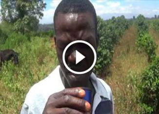 Кенийцы впервые пробуют кофе