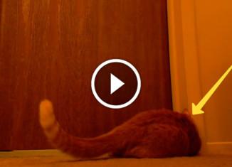 Кот мешает хозяевам спать