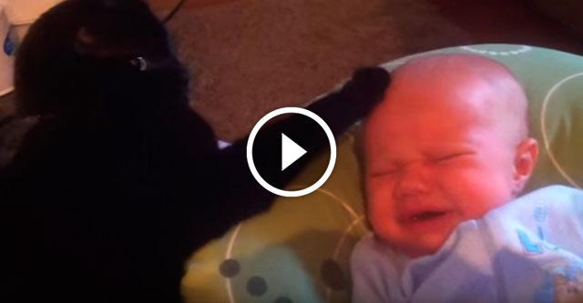 Кот успокоил ребенка