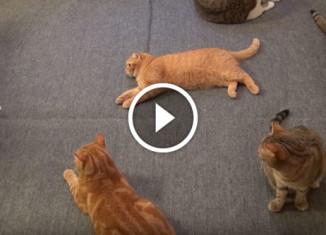 Коты и пол с подогревом