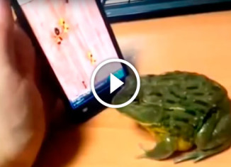 Розыгрыш лягушки