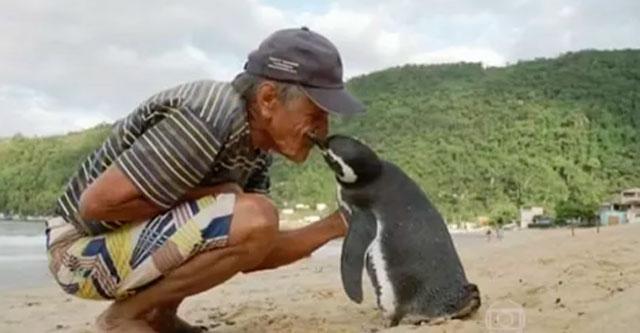 Мужчина и пингвин
