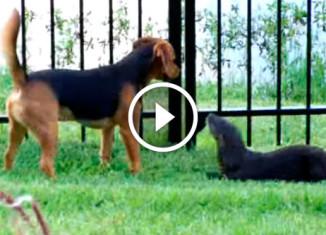 Пес и выдра