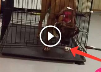 Пес выбирается из клетки