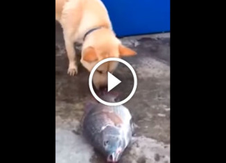 Пес спасает рыбу