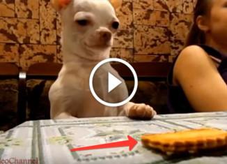 Собака крадет печенье