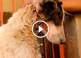 Собака с проволкой во рту