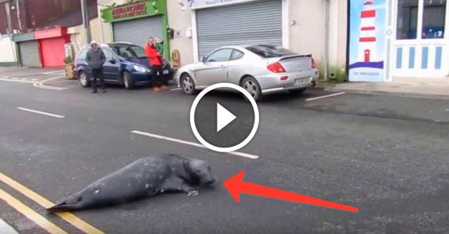 Тюлень идет в ресторан