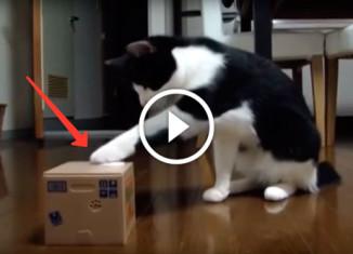 Кот в шоке от игрушки