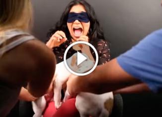 Люди с боязнью собак