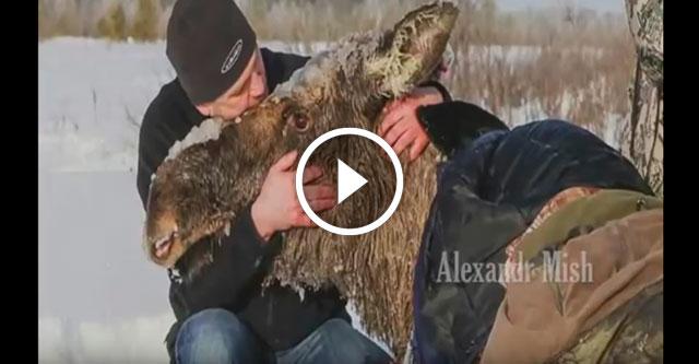 Люди спасают животных