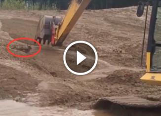Машинист экскаватора спасает оленёнка