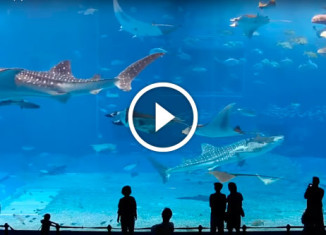 Океанариум на Окинаве