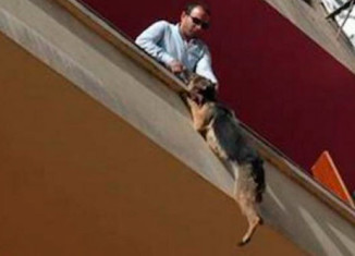 Овчарка выбросилась с балкона