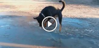 Пес ломает лед