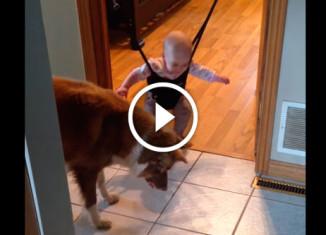 Пес учит малыша прыгать