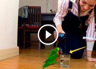 попугай радуется воде