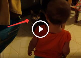разговор девочки с котом