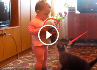 Ребенок тискал котенка