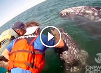 Самка кита показала детеныша
