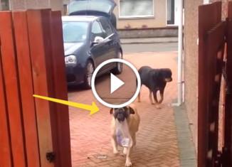 Собака носит пакеты