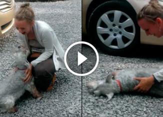 Собака рада встрече с хозяйкой