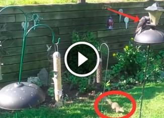 Белка и кормушка для птиц
