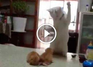 Забавная реакция кошки на драку своих котят