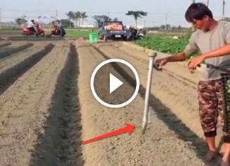 Как китайцы высаживают рассаду