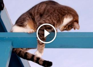 коты ловят свой хвост