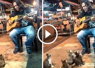 Котята слушают музыканта