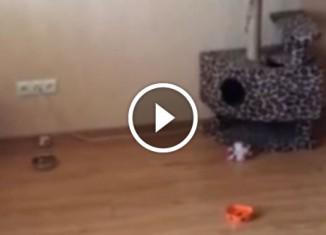 Кот и натяжные потолки