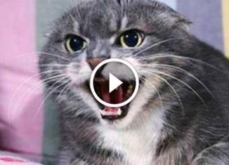 Кошка набросилась на няню