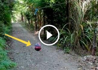 Мячик в лесу