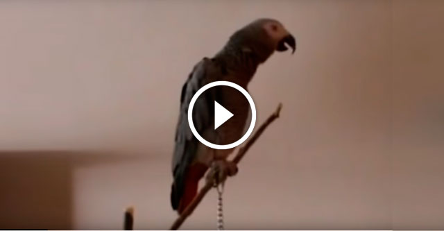 Попугай рассказывает сказку