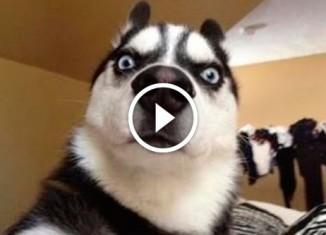 Реакция собак на лимон