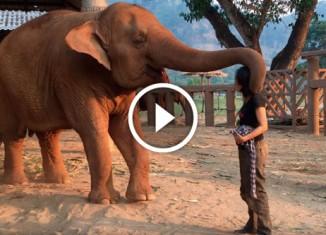 Слониха уснула под колыбельную