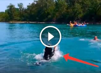 Собака смешно плавает