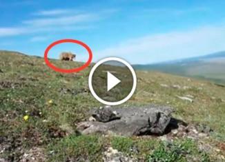 Что делать, если на тебя бежит медведь