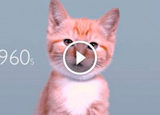 Эволюция кошачьей красоты
