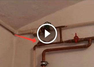 Mouse Escaping Across The Pipes (Super Mario Version)