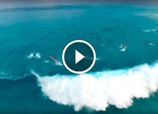 Видео про дельфинов